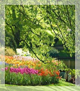 maj-w-ogrodzie-prace-sezonowe_14900_5